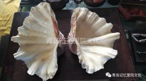 专业建设博物馆遇见青岛记忆之螺钿海贝