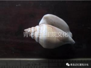 专业巡展遇见青岛记忆之螺钿海贝